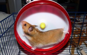 Course a pied : les runners hamster